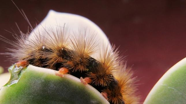 catterpillar 073 (1280x720)