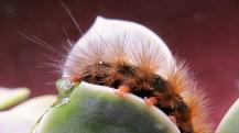 catterpillar 070