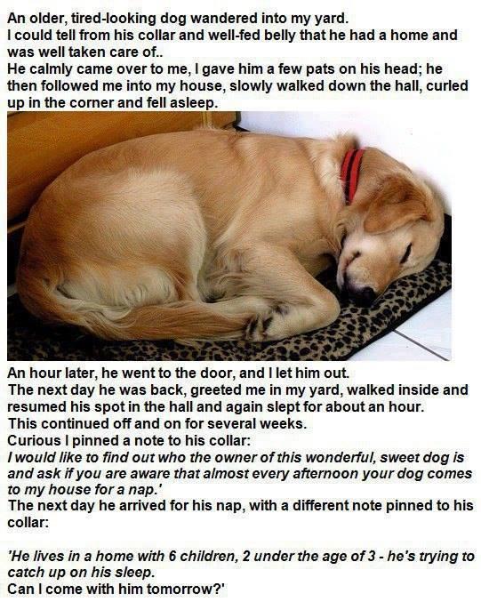 dog lazy